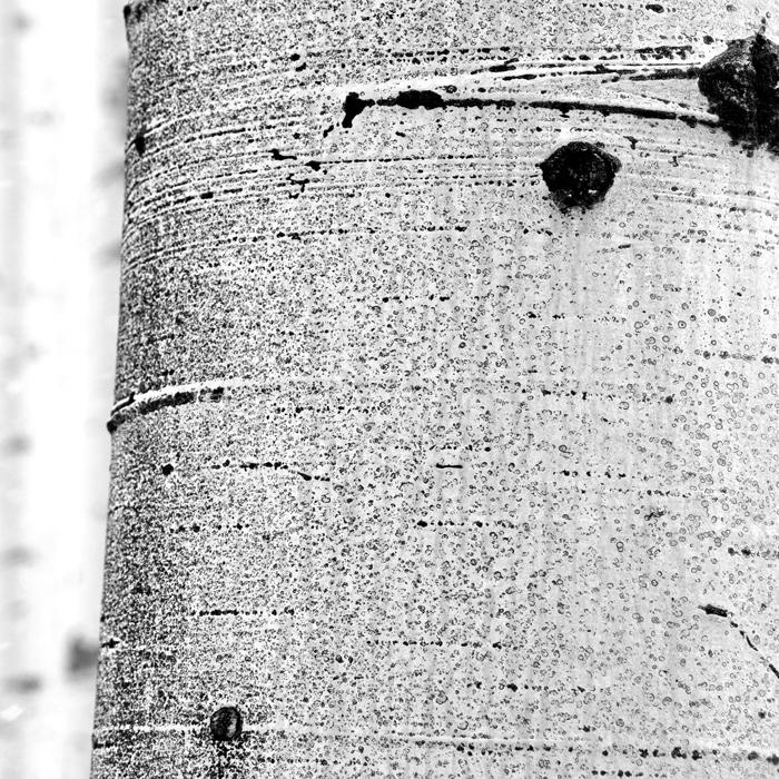 Aspen tree – Paonia Pass, CO 4/09 - Fotokunst sturctures Fotokunst Kunstfotografie Ruth Kasper Stuttgart Karlsruhe Pforzheim